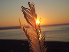 Feather Sunset
